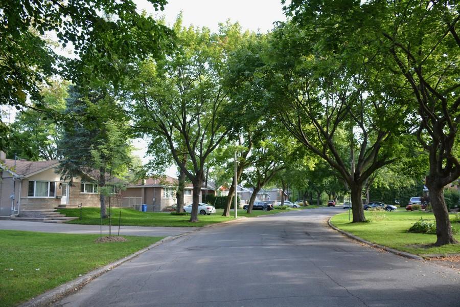 Rue courbe et bordée d'arbres dans le Dorion Garden